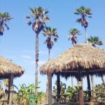 Schlitterbahn South Padre Island: The Best Little Vacation Spot in Texas
