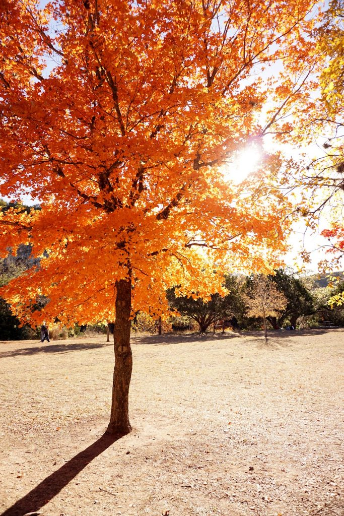 lost-maples-state-natural-area