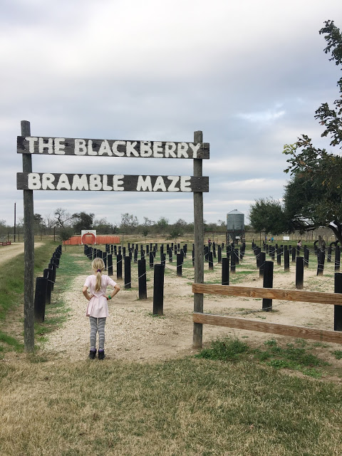 blackberry-bramble-maze